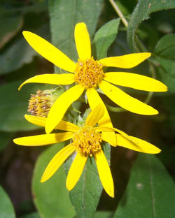 misc_flower_2