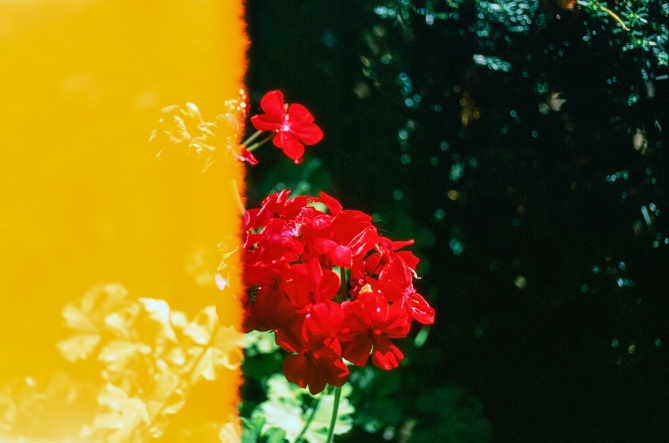 Vivid blooms